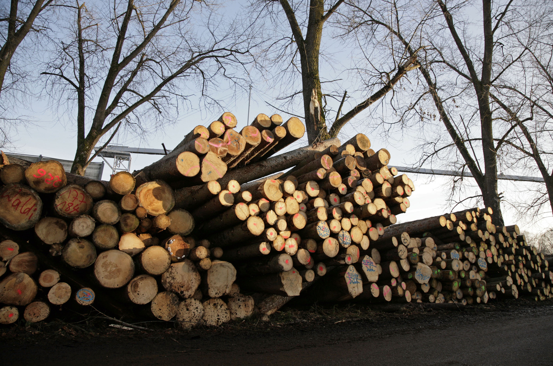 strom aus biomasse agentur f r erneuerbare energien. Black Bedroom Furniture Sets. Home Design Ideas