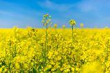 Brennpunkt Biokraftstoffe: Welche Rolle spielen Biokraftstoffe für Klima- und Umweltschutz im Verkehr?